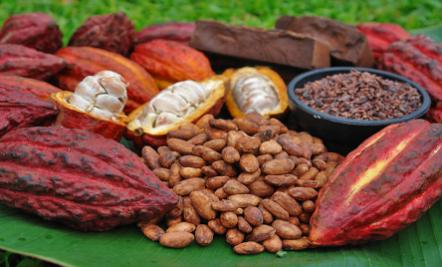 El cacao mítico y enigmático, hoy queremos compartirles una hermosa leyenda de nuestra hermana República de México